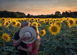 Summer, En Vacances, sunflowers, bon voyage, sunset, debbie lias, photography