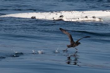 whale, birds, sea