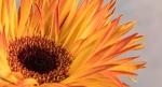 fine art, flower, Debbie Lias, photography,