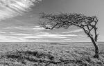 monochrome, black and white, tree, beachy head, debbie lias, photography