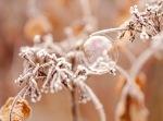 frozen, bubble, ice, frost, debbie lias, photography