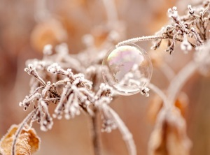frozen, bubble, ice, frost, debbie lias, photography