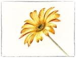 fine art, flower, Debbie Lias, photography