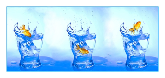 goldfish, water, debbie lias, photography
