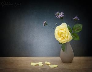 yellow rose, still life, flowers textures, debbie Lias, photography